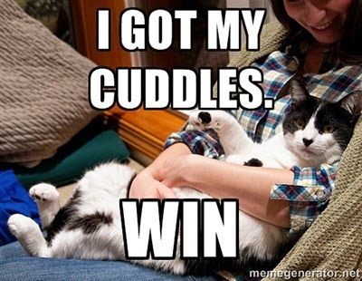 Cat Memes Top 10 Things Cat Owners Can Identify With Cat Memes