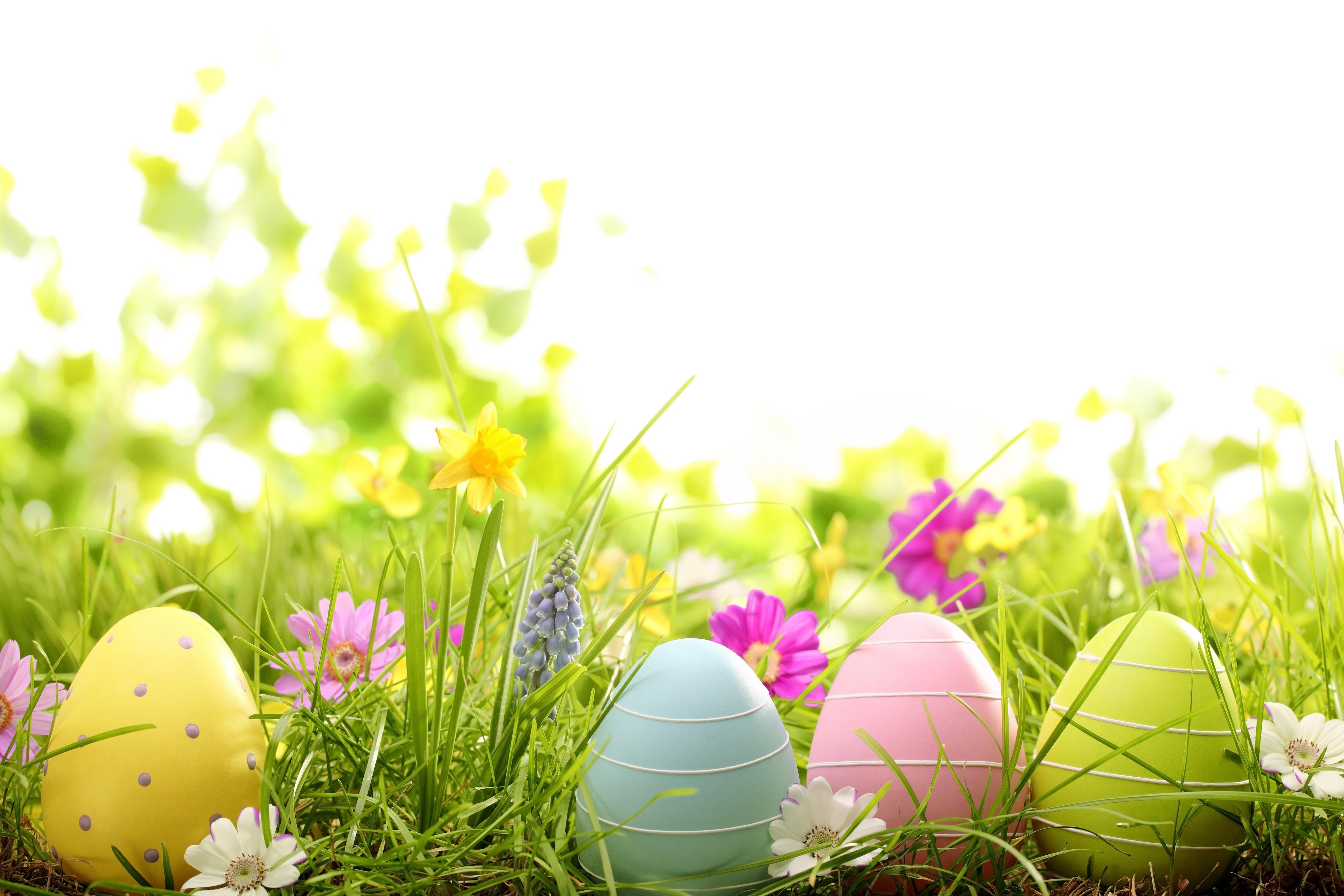 Easter Eggs Google Search Easter Wallpaper Easter Backgrounds Easter