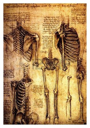 Antiguos Dibujos Anatomicos Realizados Por Leonardo Da Vinci Un Estudio De Los Huesos Y Las Articulaciones Humanas Que Muestran Un Esqueleto Detallada Dibujos Como Dibujar Cosas Arte De Anatomia