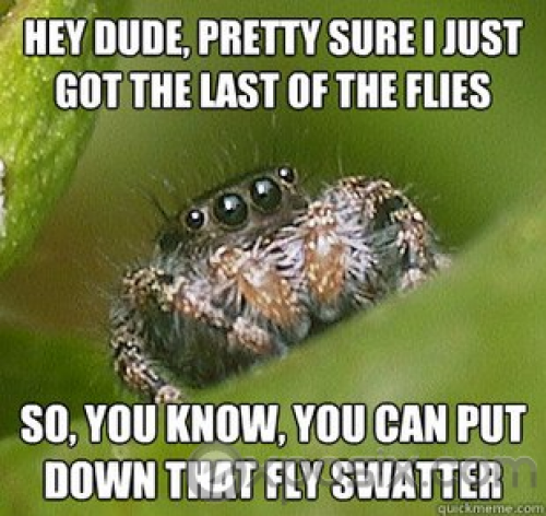 misunderstood-spider (1)