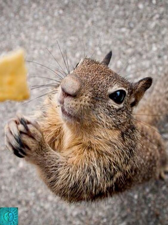 22 Squirrels That Are So Animated You Would Think They