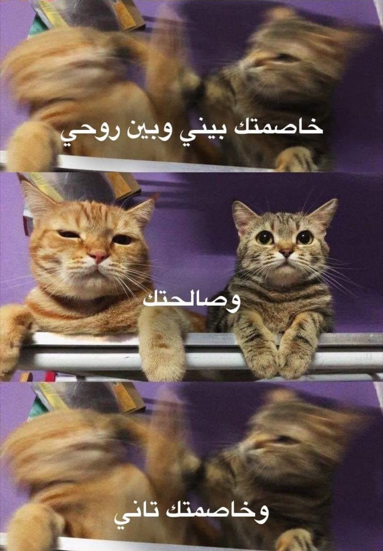 Pin By 7 Gxdvf On رمضان Funny Memes Hipster Photography Funny Arabic Quotes