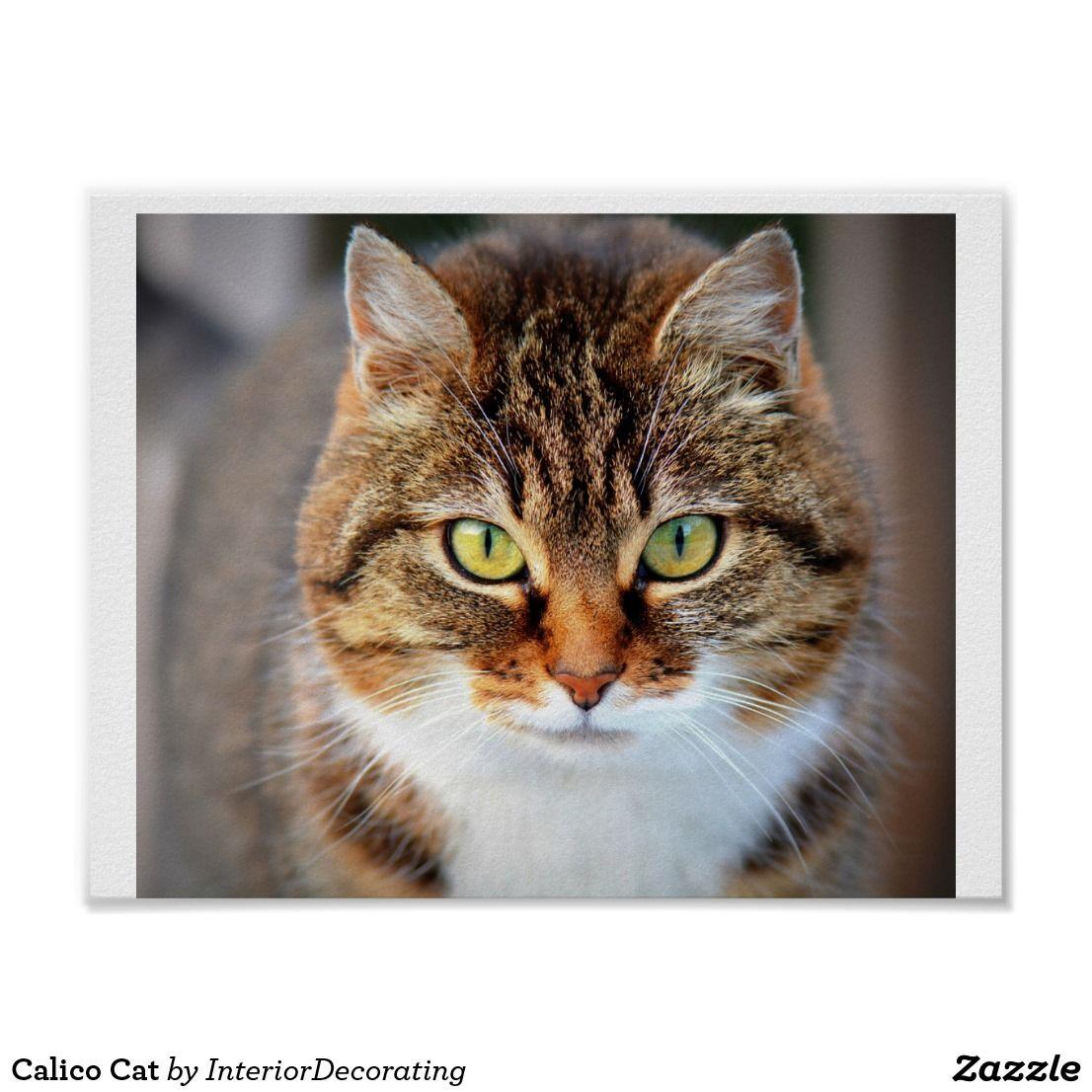 Calico Cat Poster Zazzle Com Animals Cats Pets Cats