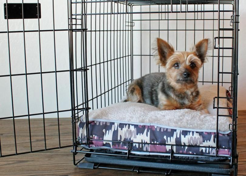 Crate Training A Puppy Whining Peeing Chewing Solved Train