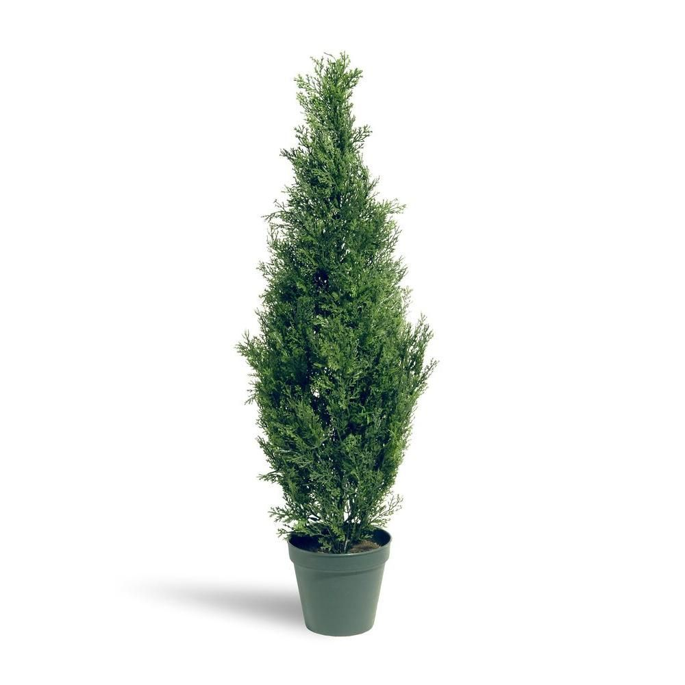 National tree company 3 ft arborvitae tree in dark green