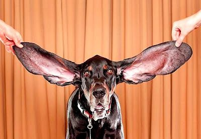 Limpeza Dos Ouvidos Maior Cao Do Mundo