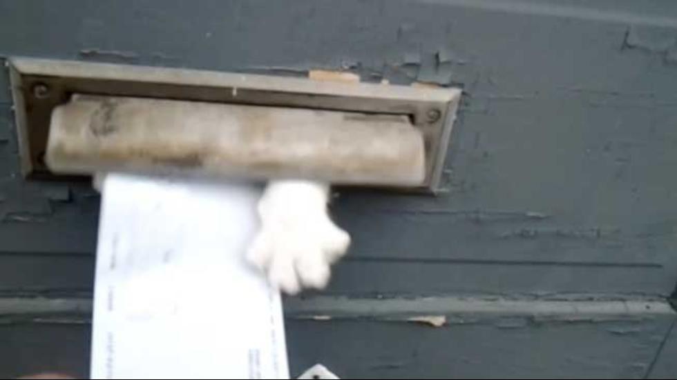 A ferocious feline won't let mailman deliver the mail