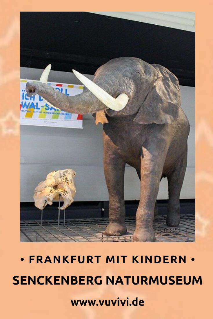 Unternehmungen Mit Kindern In Frankfurt