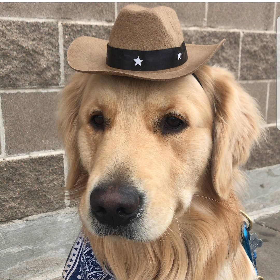 """SHΣRIҒҒ RΣPΩRTIΠG ҒΩR DUTΨ 🤠 Super cute dog or cat cowboy hat. Wild west  fancy dress party costume ideas for pets. Cheap and easy. Golden retriever. 876507950aca"