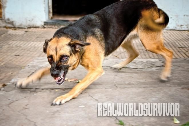7 Ways To Protect Yourself When A Dog Attacks Dog Attack Dogs