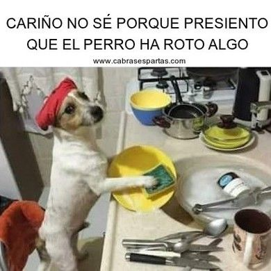 Perro Fregando Los Cacharros Es Sospechoso Memes De Perros Chistosos Chistes Memes