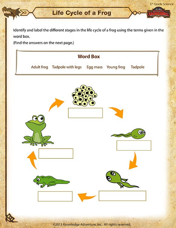 Life Cycle of a Frog - Printable Science Worksheets ...