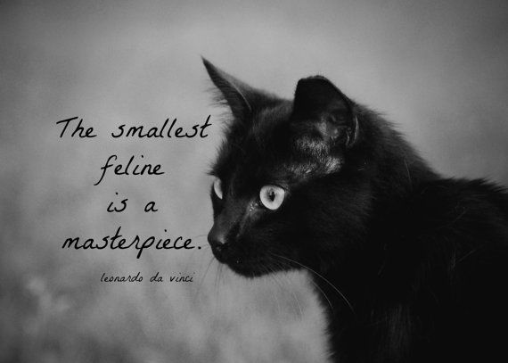 Kol-Ut-Shan] | Raevyn Penelope♡ | Black cat quotes, Cat ...