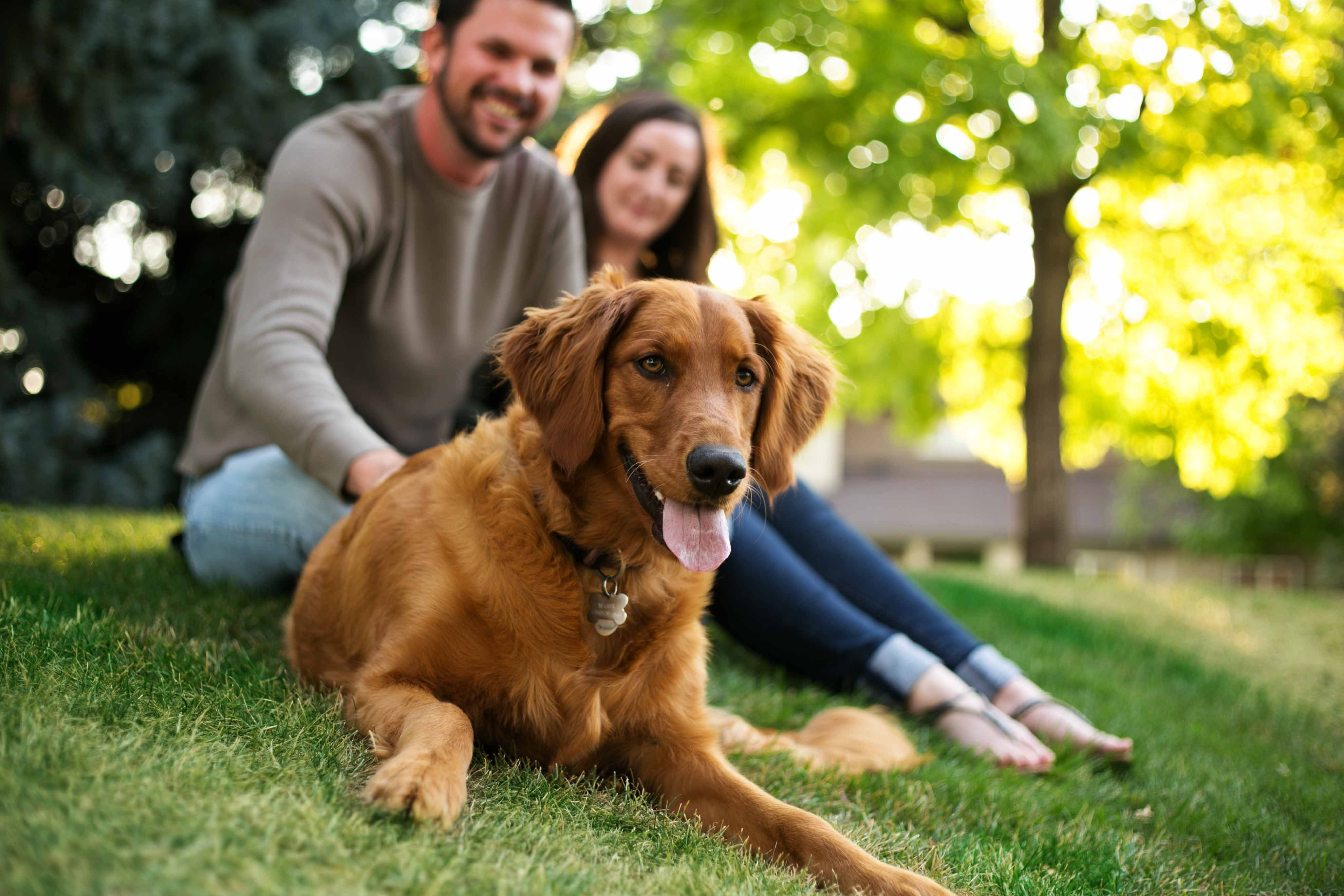 Curious What Pet Insurance Is And How It Works Read Testimonials From Veterinarians And Customers On Why They Love Pets Best Cool Pets Cheap Pet Insurance Best Pet Insurance