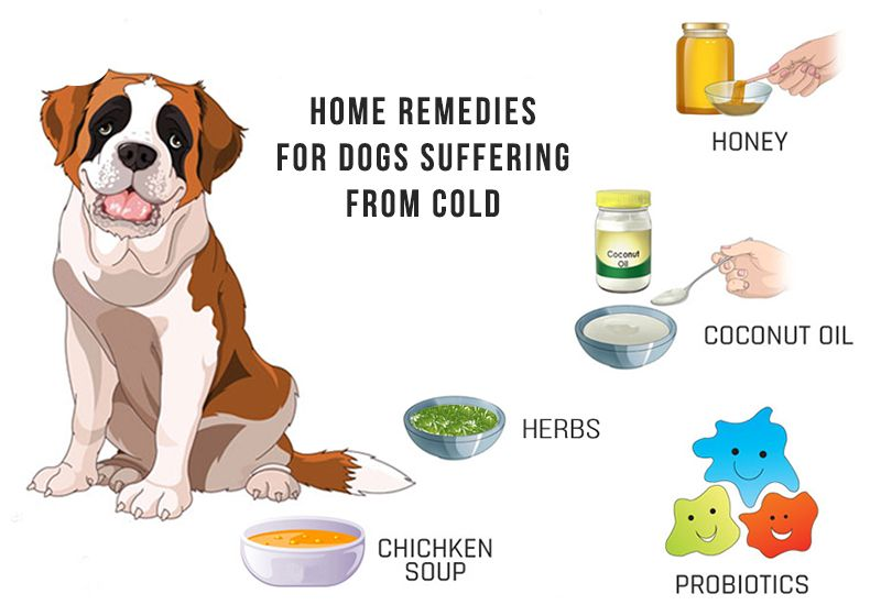 5 Home Remedies For Dogs Suffering From Cold With Images