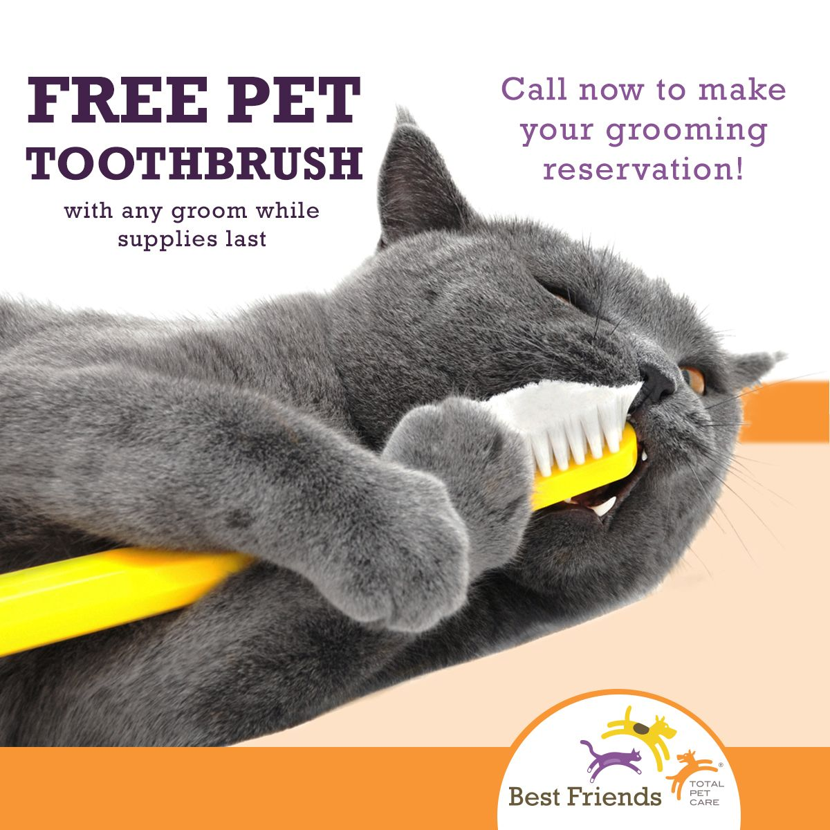 February is Pet Dental Health Month! Schedule a grooming