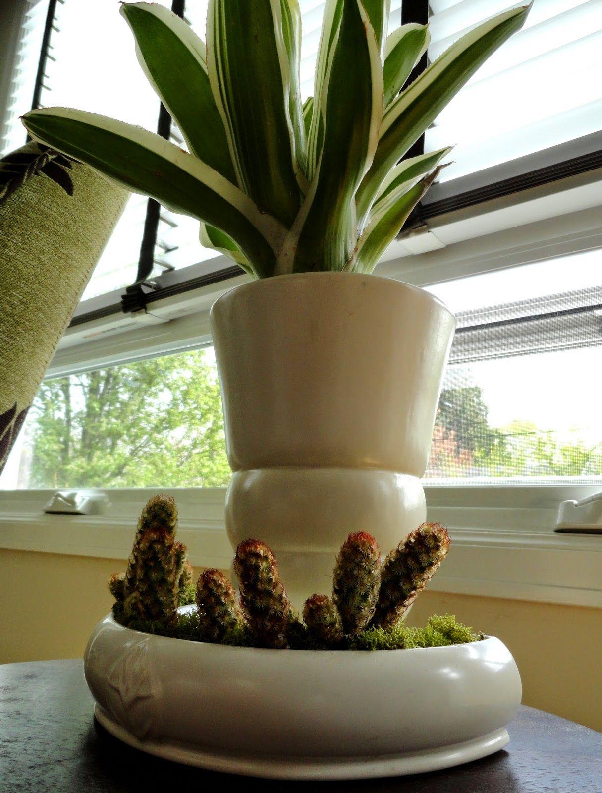 danger garden: Wednesday Vignette - sunshine on cinnamon spikes ...