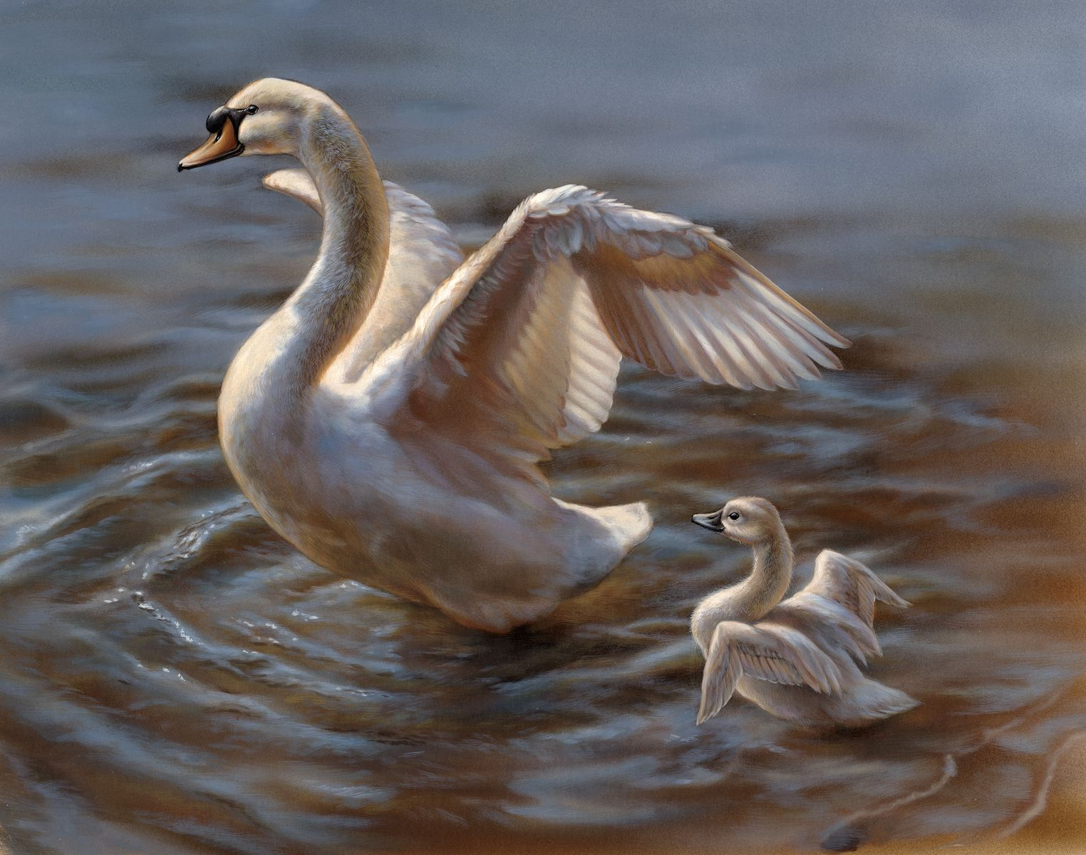 39 best swans images on pinterest swan lake swans and google images
