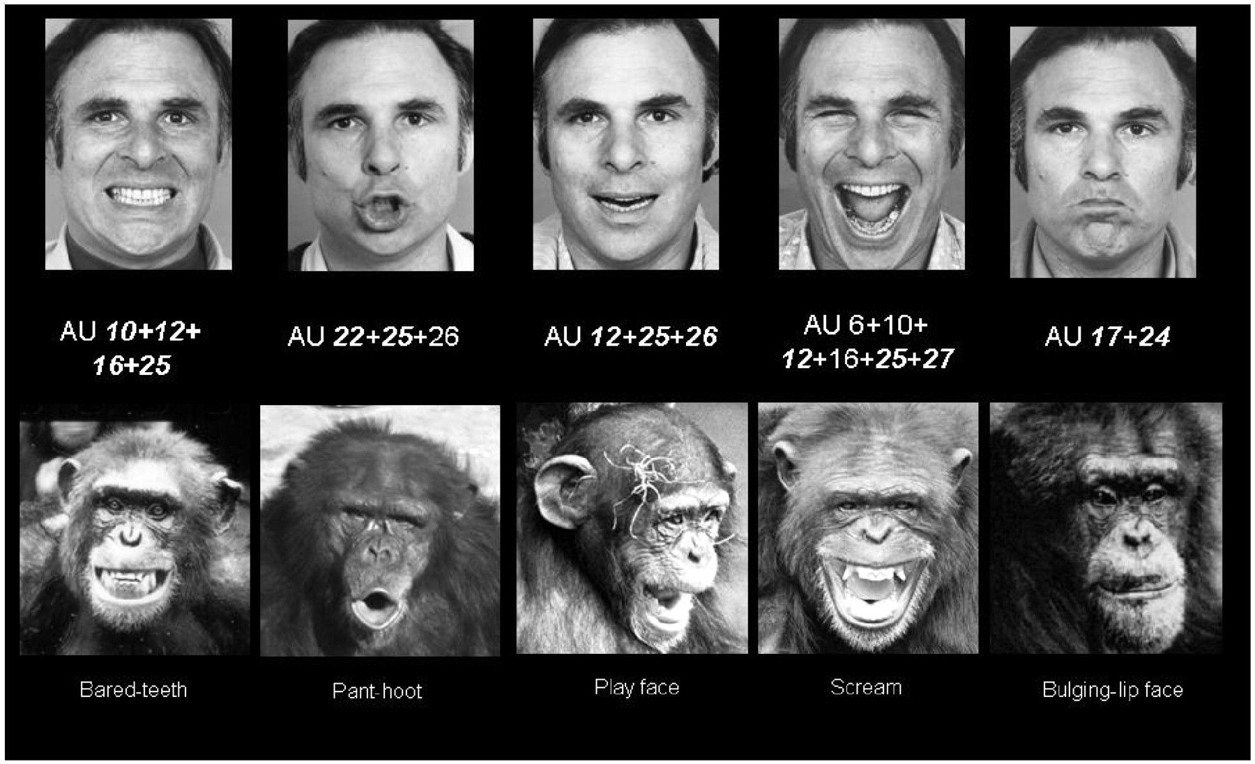 language in chimpanzees and humans Can non-human primates learn and use human languages do they have the mental ability to comprehend a symbolic communication system and to use it creatively research with chimpanzees, bonobos, and gorillas to answer these questions has been ongoing since the 1960's.