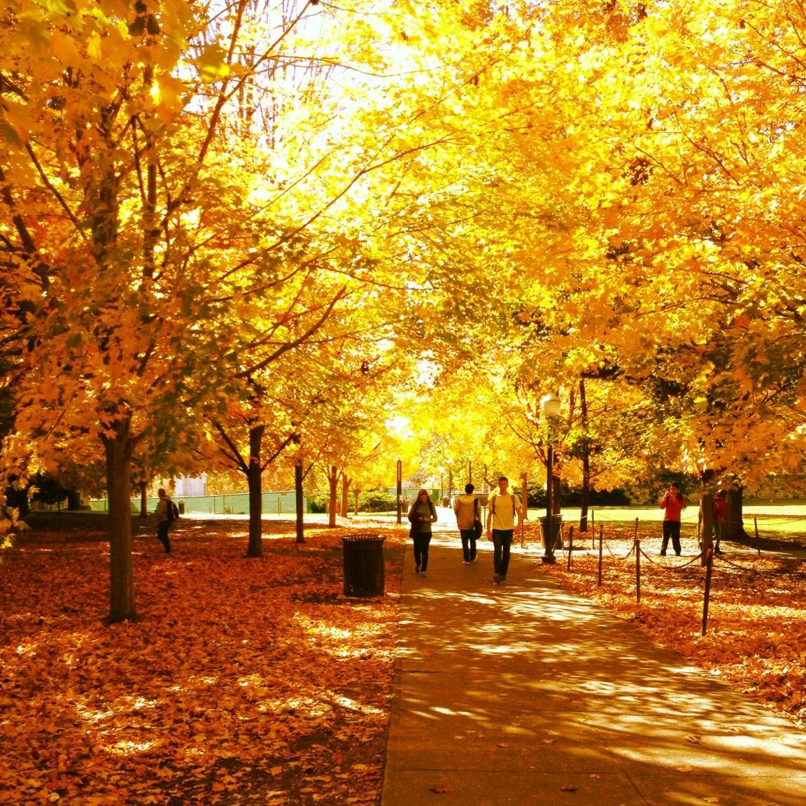 Fall Foliage on the campus of Virginia Tech. Blacksburg ...