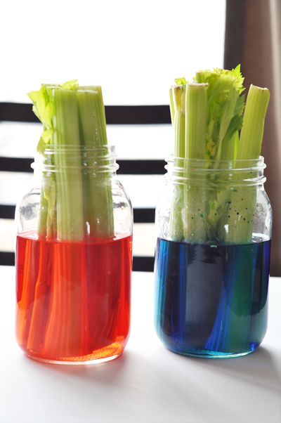 A fun science experiment for toddlers - celery and food coloring. I ...