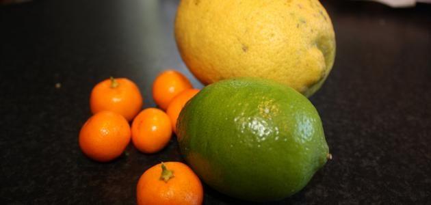 كيفية زراعة الحمضيات Citrus Agriculture Fruit