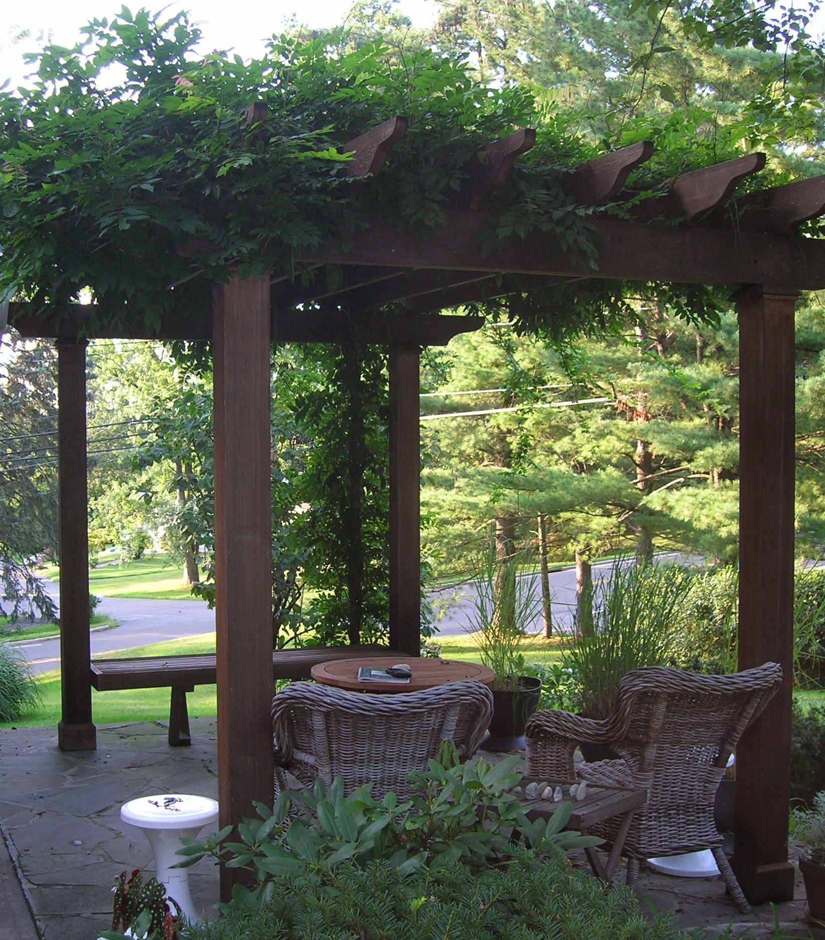Pergola Climbing Plants Garden Living