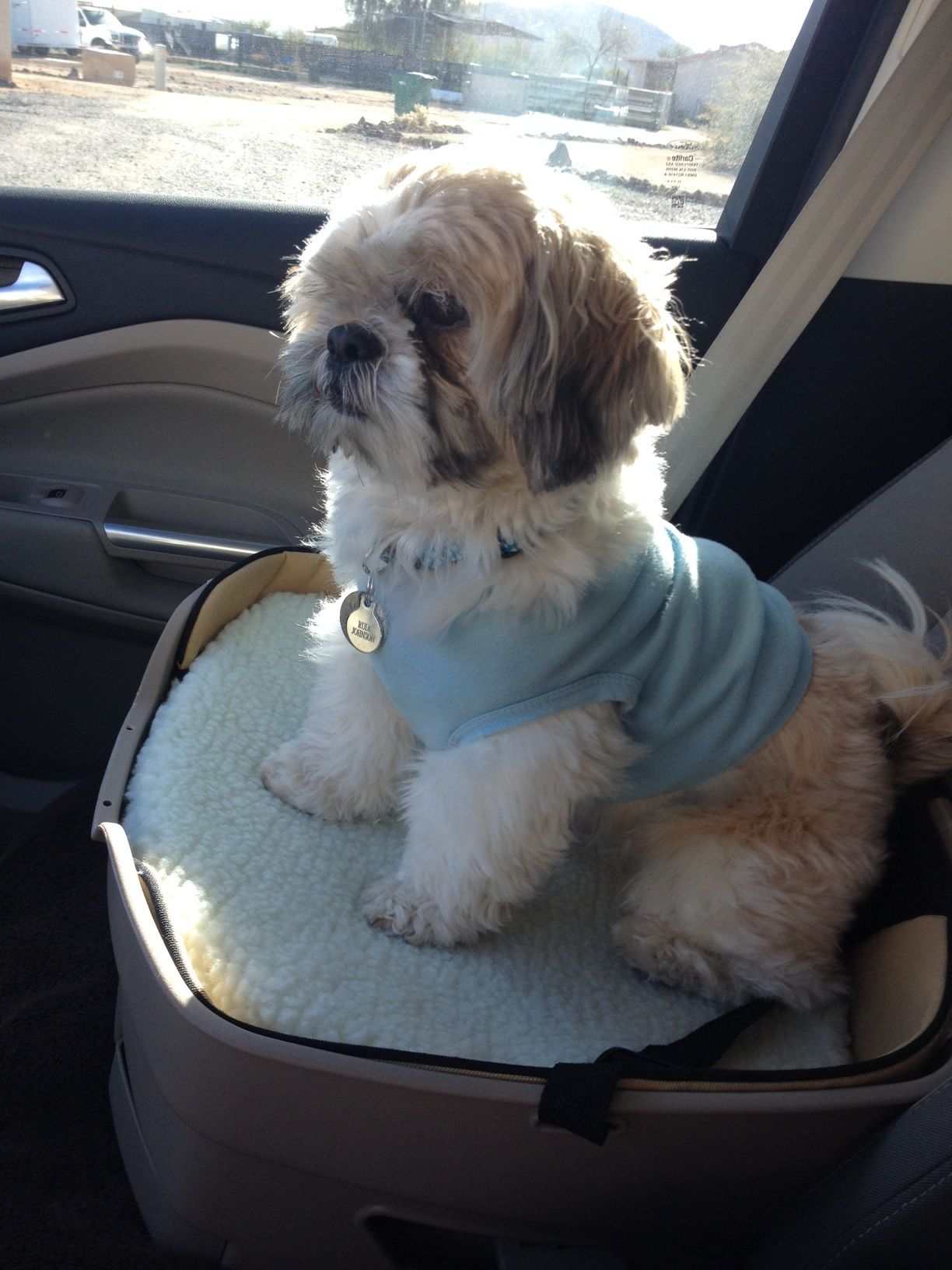 20 Travelling With Shih Tzu Tips For A Better Journey Shih Tzu Shih Tzu Dog Shih Tzu Puppy