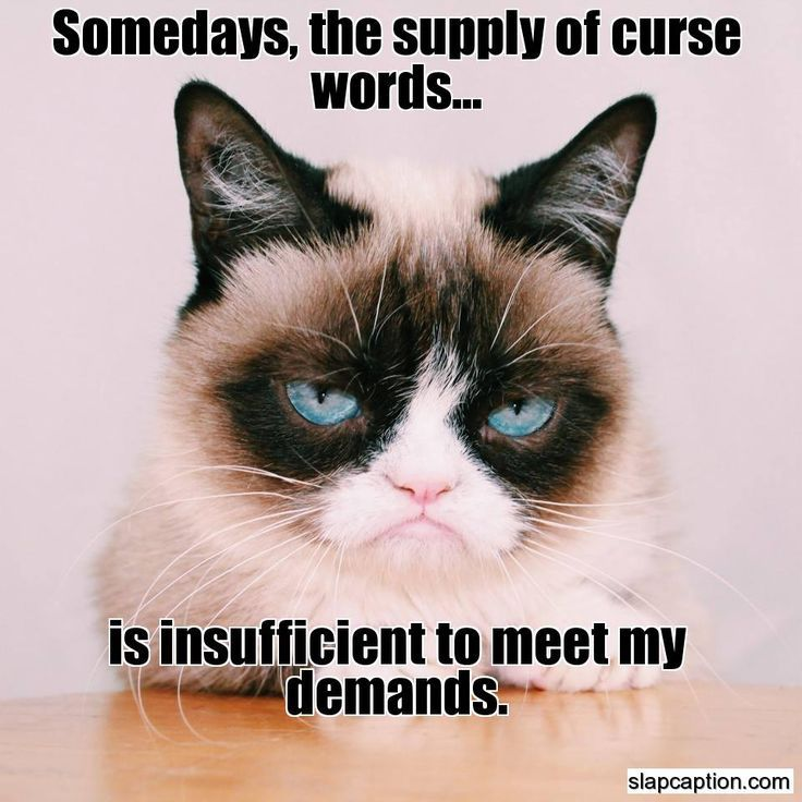 Some Days The Supply Of Curse Words Is Insufficient To Meet Grumpy Cat S Demands Funny Grumpy Cat Memes Grumpy Cat Humor Grumpy Cat