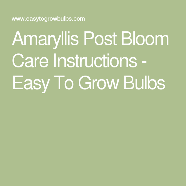 Amaryllis Post Care Instructions Grow Bulbs Gardens And Plants