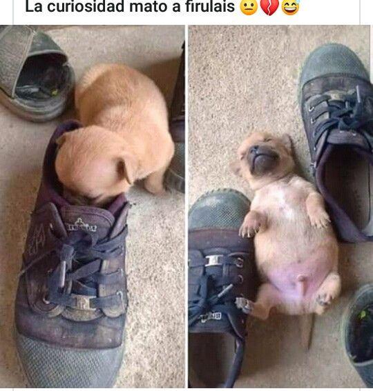 Pin De Malena San Miguel En Cosas Para Perder Tiempo Memes Divertidos Sobre Perros Fotos De Memes Divertidos Memes De Perros Chistosos