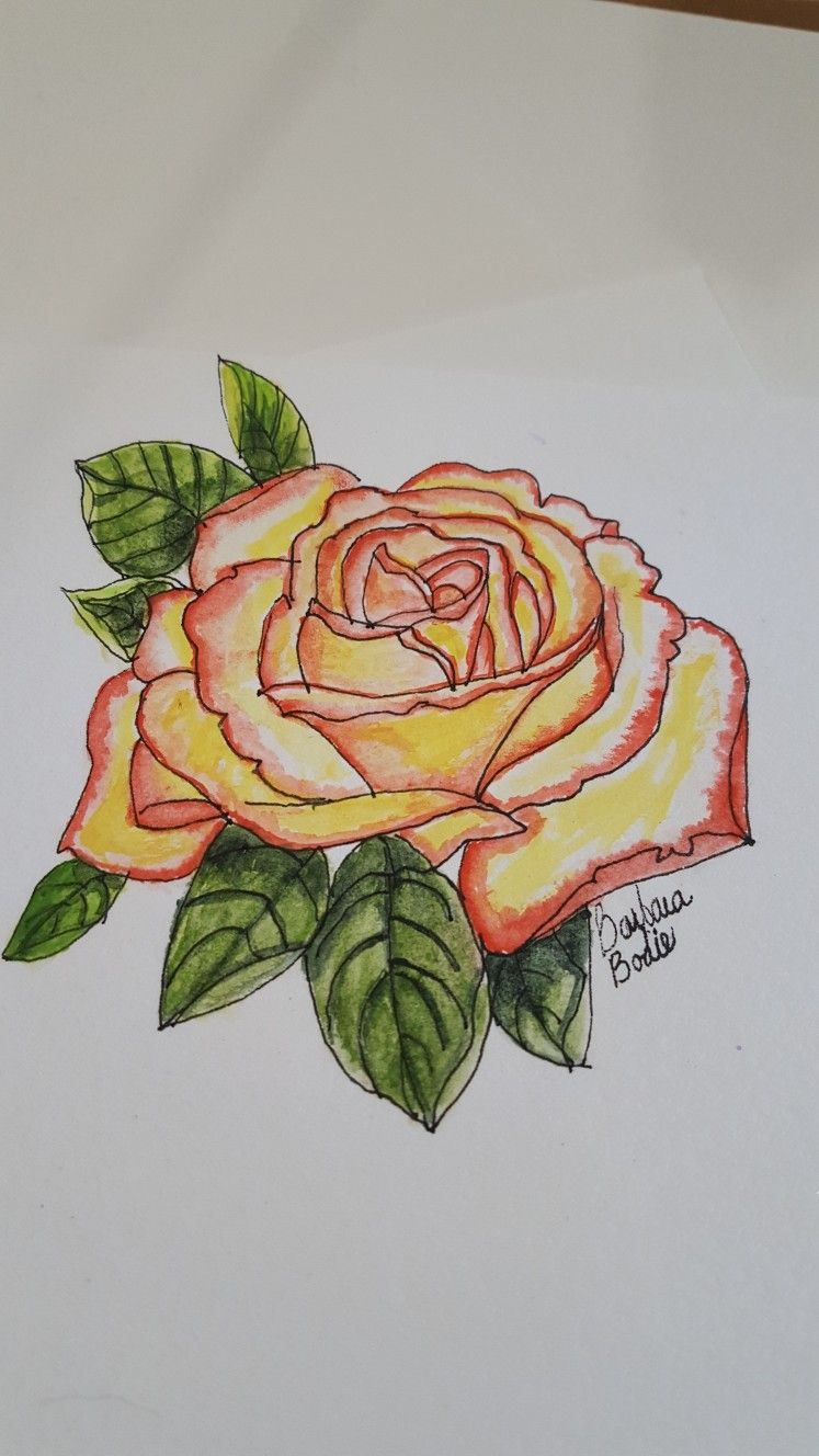 Flower Drawing Image By Diane Gennaro On Watercolors Art