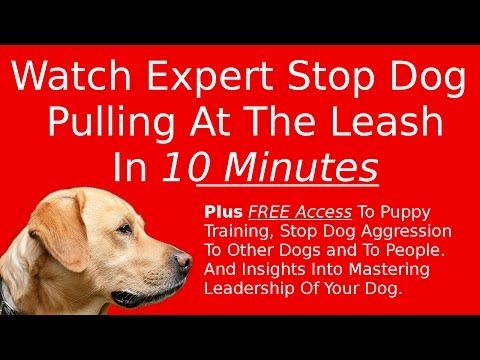 How To Stop A Dog From Pulling When Seeing Another Dog