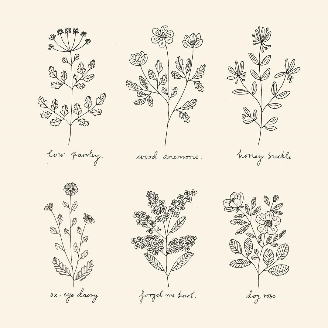 Ryn Frank On Instagram Drawing Lots Of Wildflowers In 2020 With Images Flower Line Drawings Line Art Flowers Wildflower Drawing