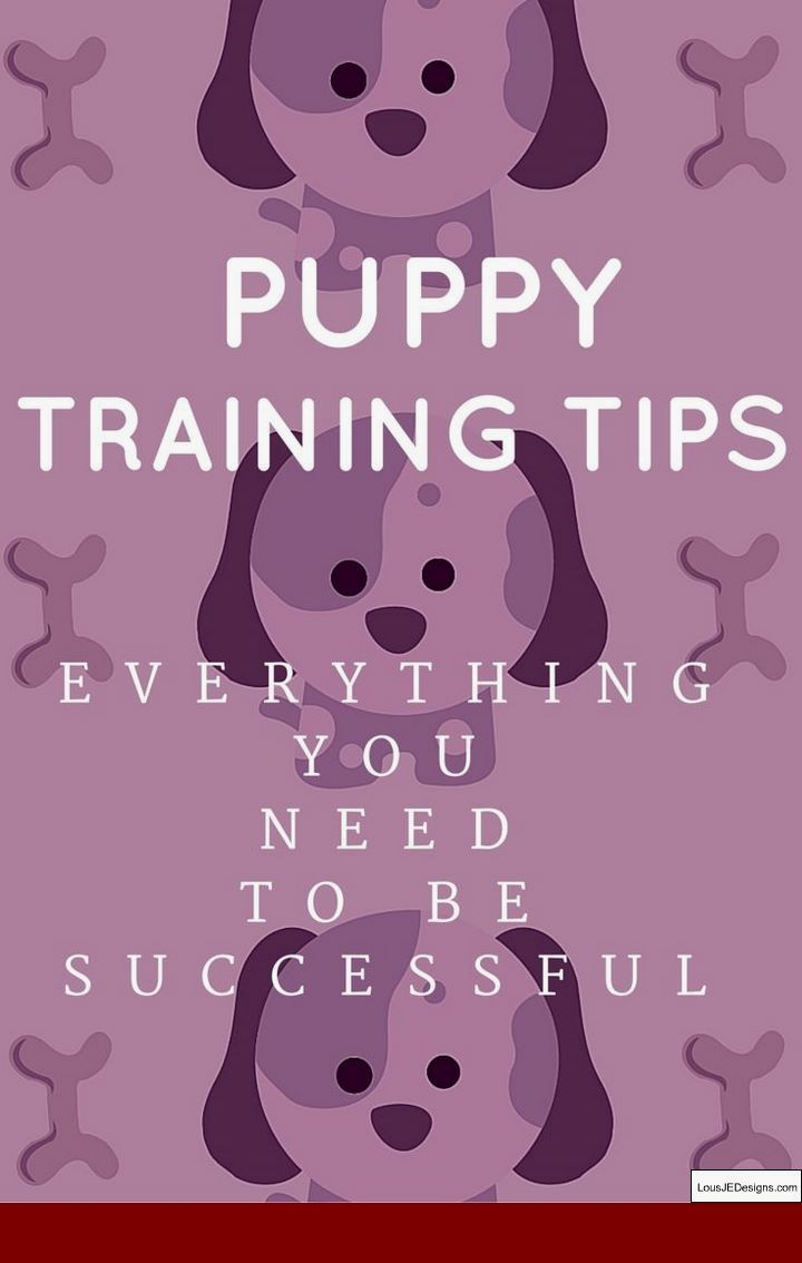 Best way to train a dog to stop biting and pics of how to