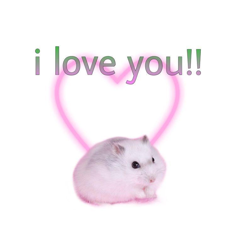Pin By Migoni On Stickers Para Whatsapp 3 In 2020 Cute Love Memes Cute Memes Love Memes