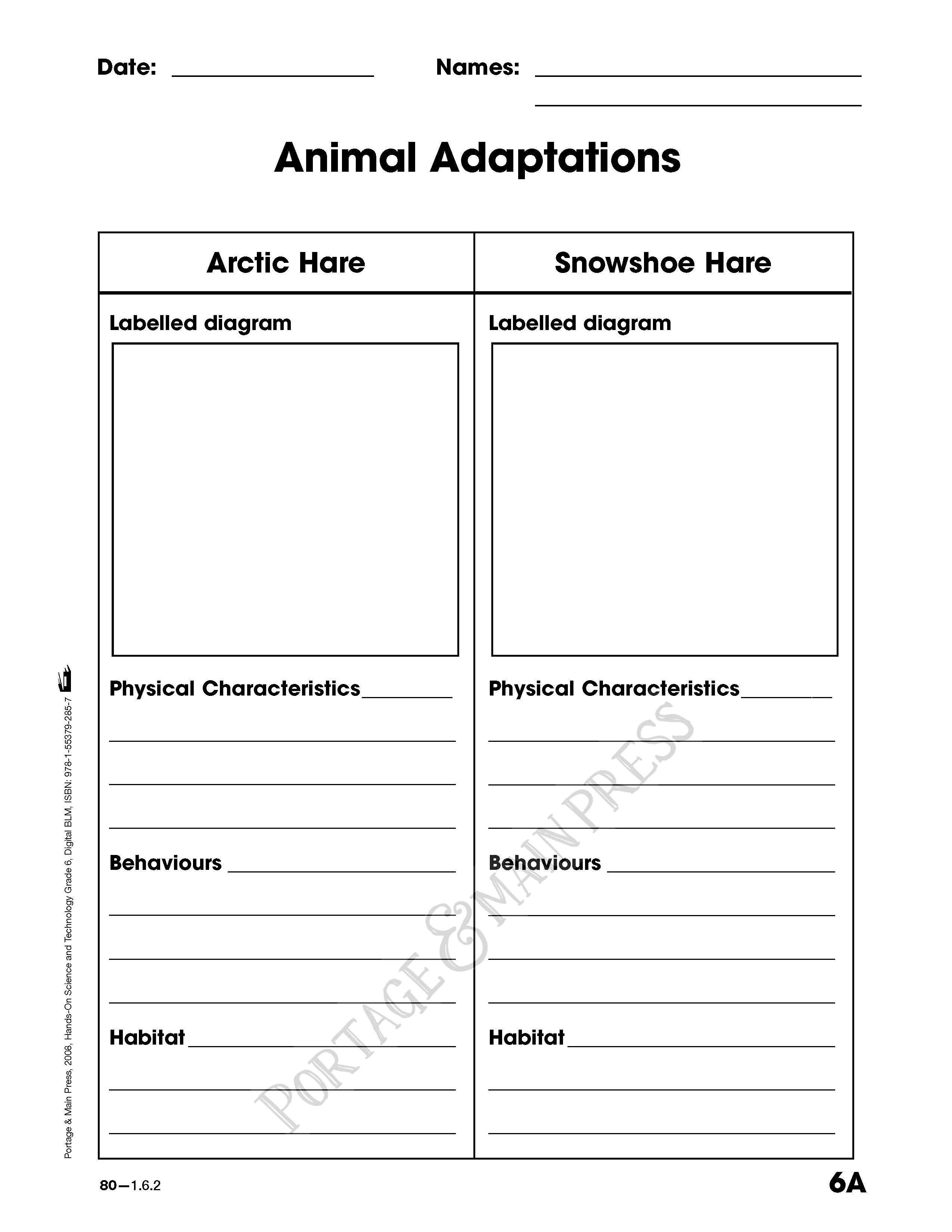 grade 6 science animal adaptions activity sheet science ideas teaching science science. Black Bedroom Furniture Sets. Home Design Ideas