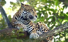 Top 5 wildlife experiences in Latin America