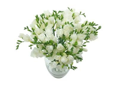 White Whispers Freesia Bouquet Fresh White Freesia Flowers For Next Day Delivery Freesia Bouquet Freesia Flowers Beautiful Bouquet Of Flowers