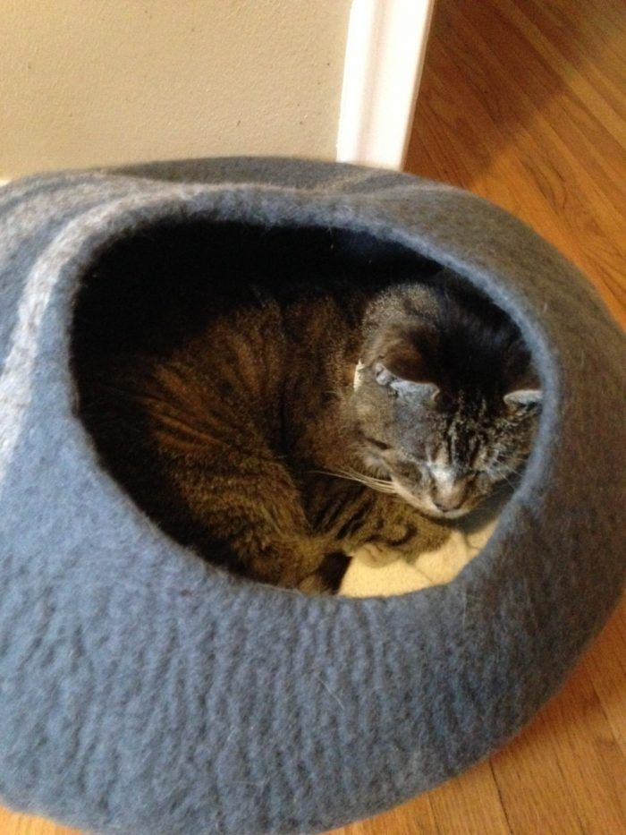 5 Types Of Personalities In Cats With Images Cancer In Cats