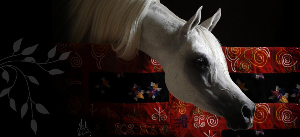 فوائد نفسية وأمراض تعالج بالخيل Horses Arabian Horse Arabians