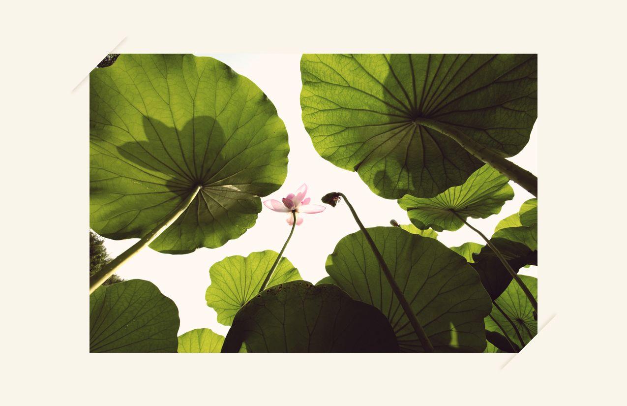 Perspectiva verde  #inspiración #colores #México #naturaleza #verde @Bailey Sullivan