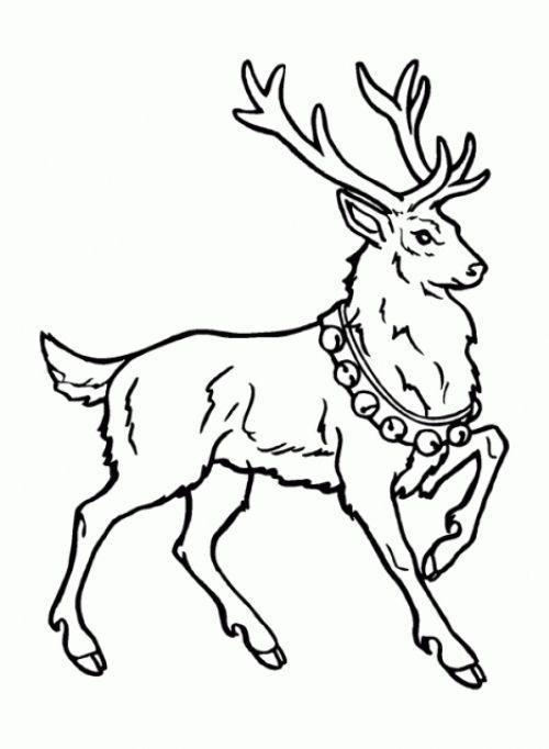 Varbak Com Varbak Resources And Information Deer Coloring Pages Animal Coloring Pages Reindeer Drawing