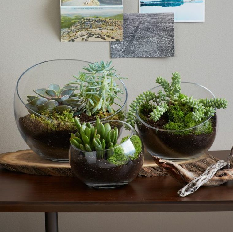 terrarium d coratif fabriquer soi m me terrarium terrarium jardins et jardinage. Black Bedroom Furniture Sets. Home Design Ideas
