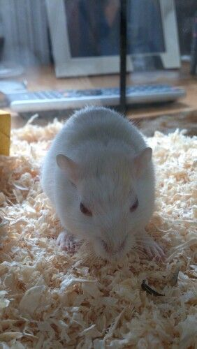 And this is my gerbil Leonard
