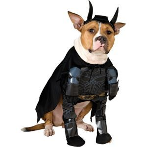 Batman Dark Knight Dog Costume Batman The Dark Knight Party