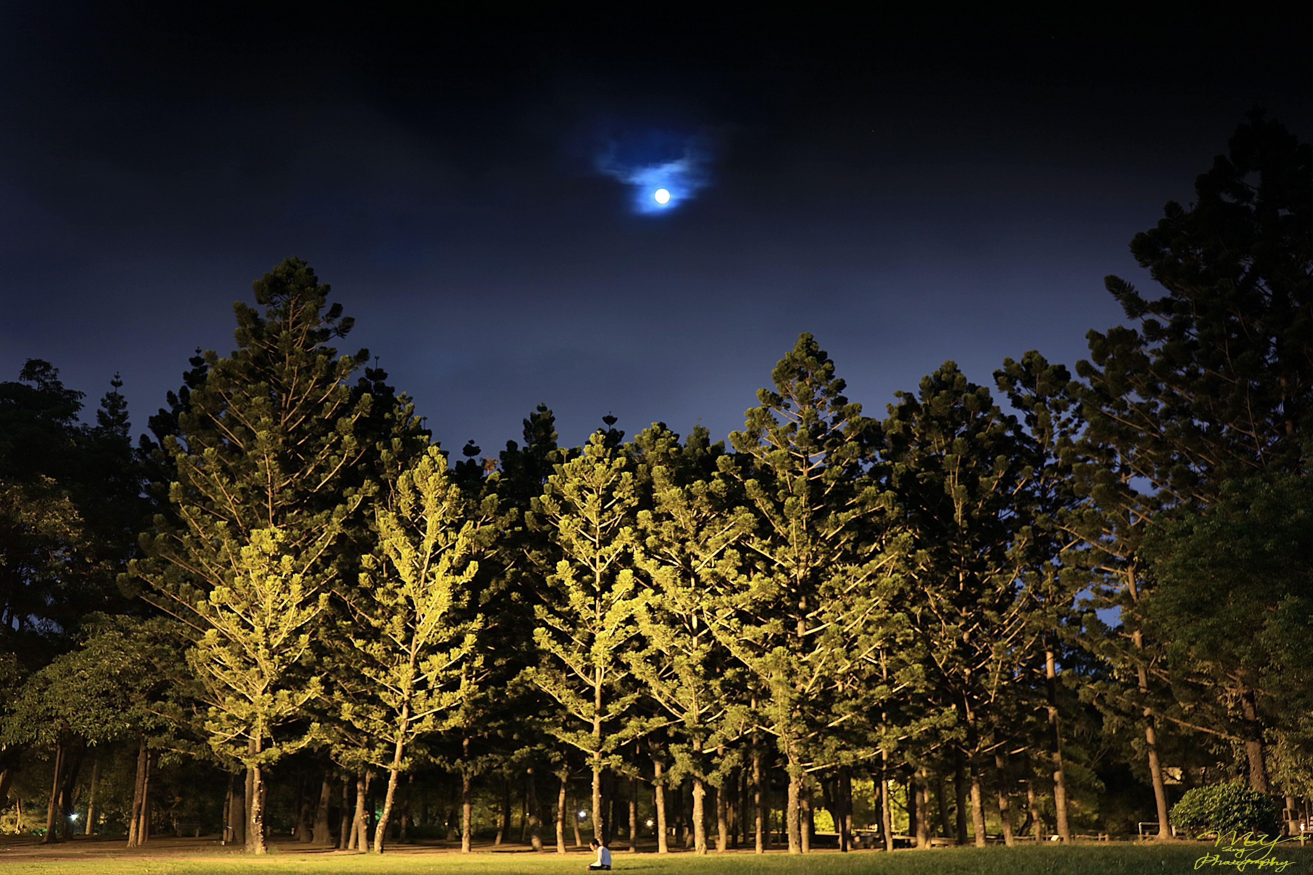 Transcendental Meditation ~ Tainan Park, North District, Tainan City, Taiwan