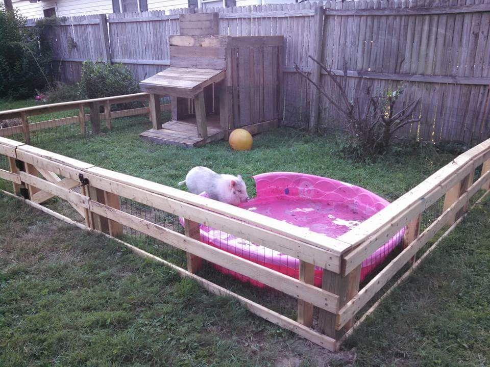 Mini pig outdoor housing outdoor housing examples for Indoor pig pen ideas