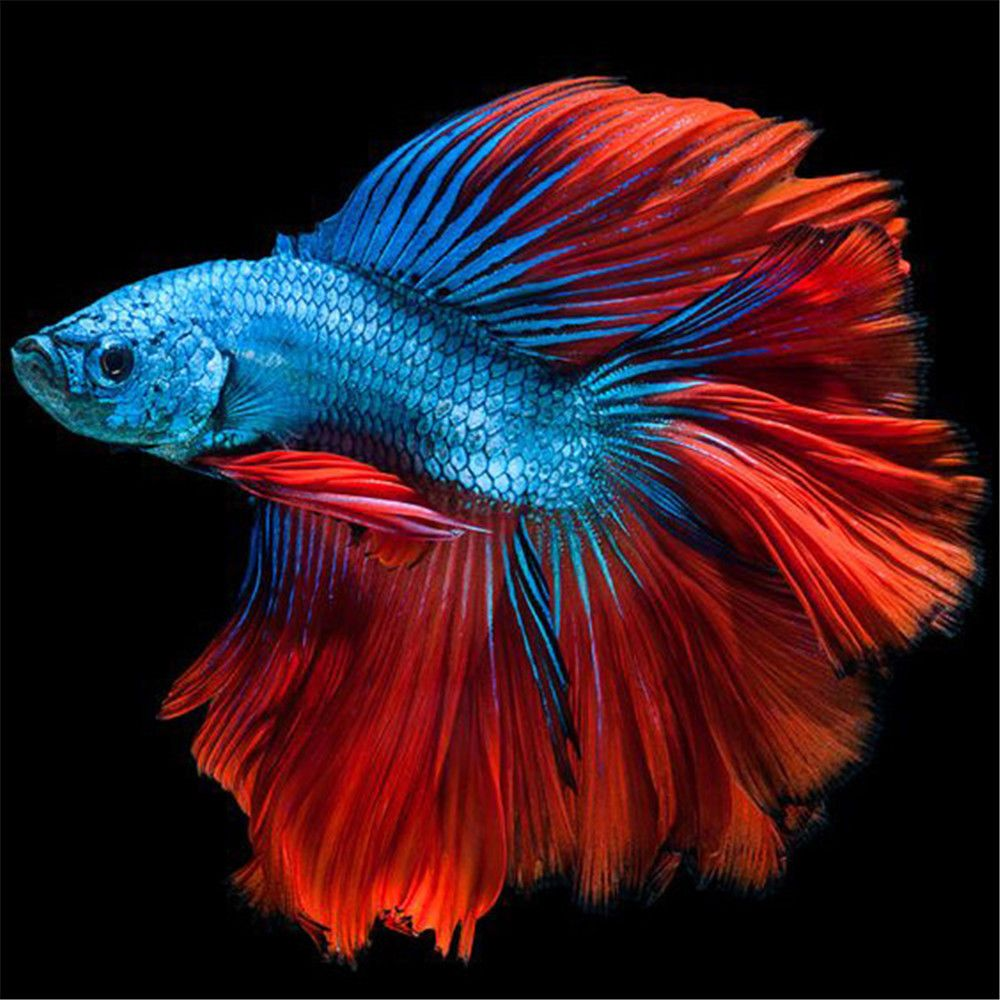 $4.31 - Home Decor Gift Diy 5D Cross Stitch Colorful Fish Diamond ...