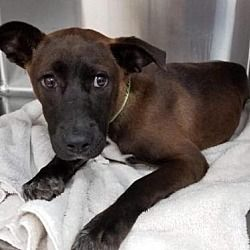 Available pets at Rescue Dogs Rock NYC, Inc. in New York